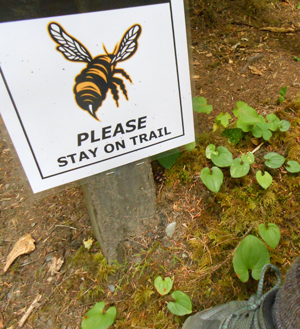 "a sign beside the trail: image of a wasp, ""PLEASE STAY ON TRAIL"""