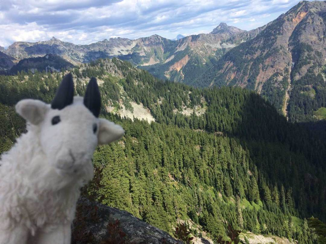 A view of the mountains with a goat
