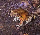 Une grenouille dans la jungle