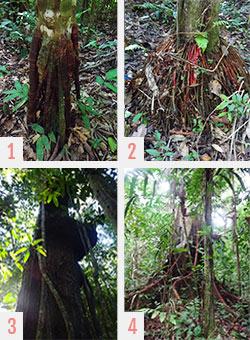 Les plantes de la Selva