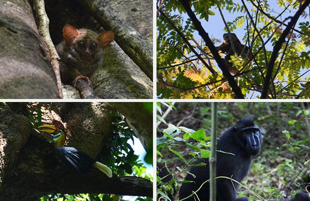 Les animaux à voir à Tangkoko