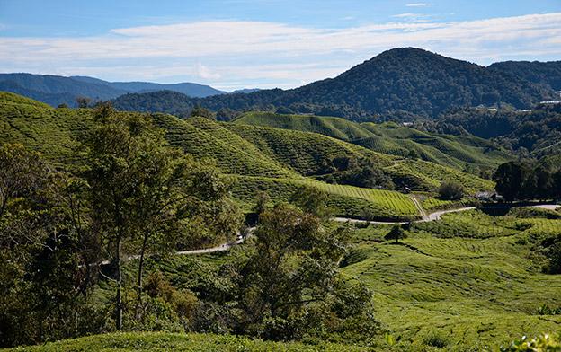 Visiter les Cameron Highlands