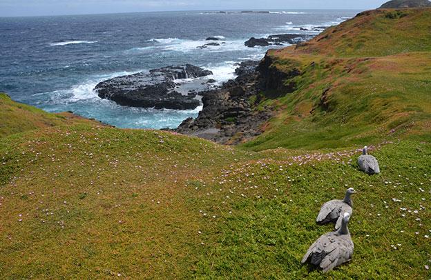 La côte de Philip Island