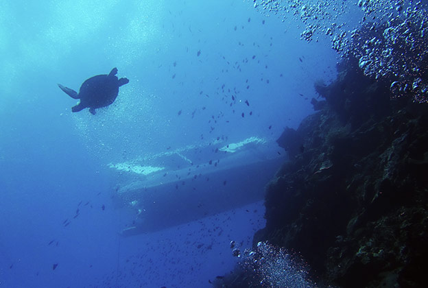 Plonger et Snorkeling à Bunaken