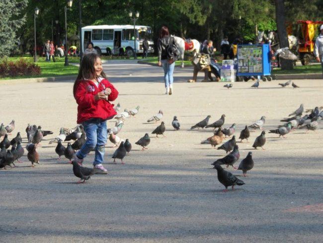 Girl feeding the pigeons in Panfilov Park in Almaty