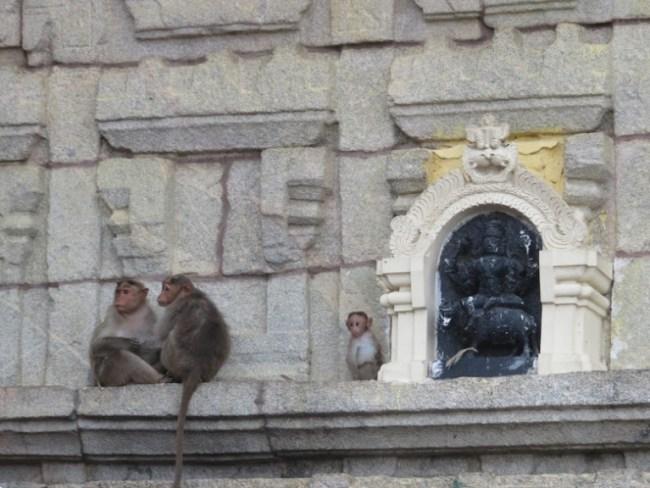 things to do in mysore: monkeys at chamundi hill