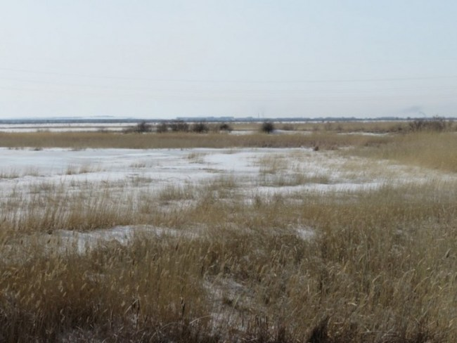 Frozen steppes in Kazakhstan
