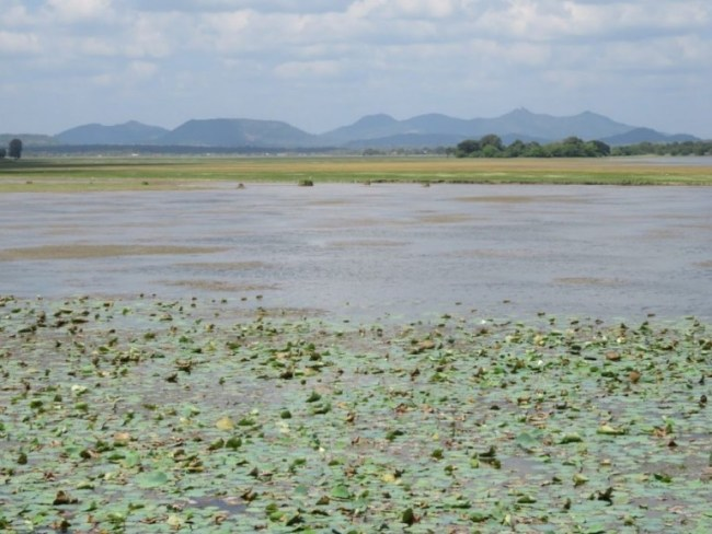 Tissa Wewa Lake in Tissamaharama on Sri Lanka's Southern coast
