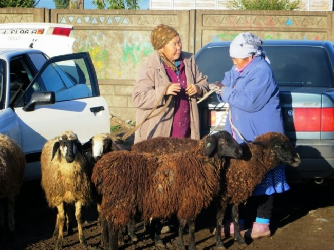 The animal market is among the top things to do in Karakol Kyrgyzstan