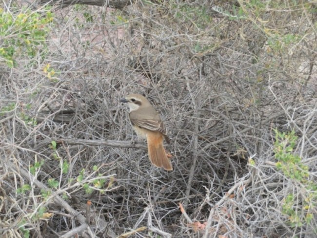 Bird in Altyn Emel National park