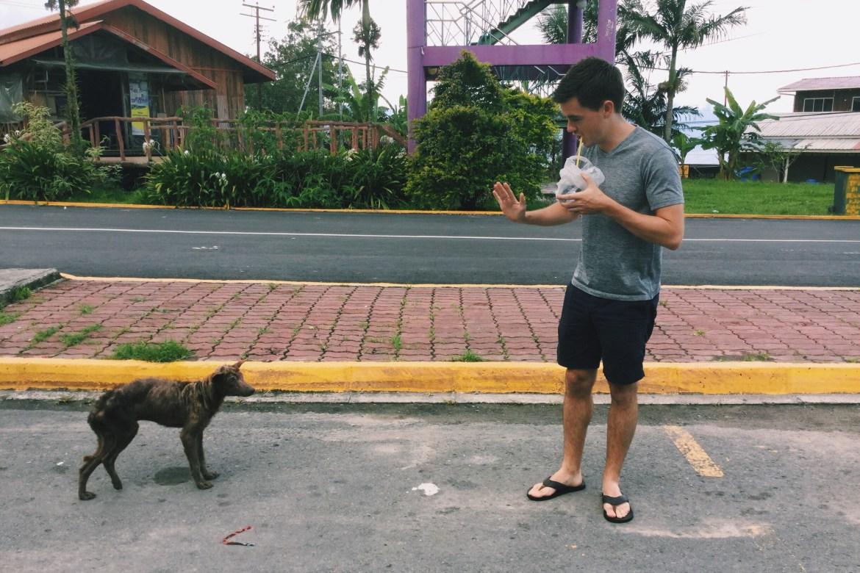 Malaysia Dog