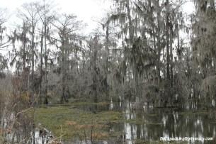 Lake Martin Louisiana