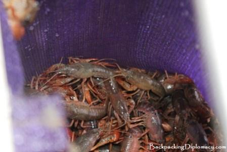 Bagging crawfish