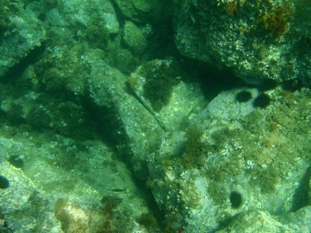Snorkeling in Costa Brava