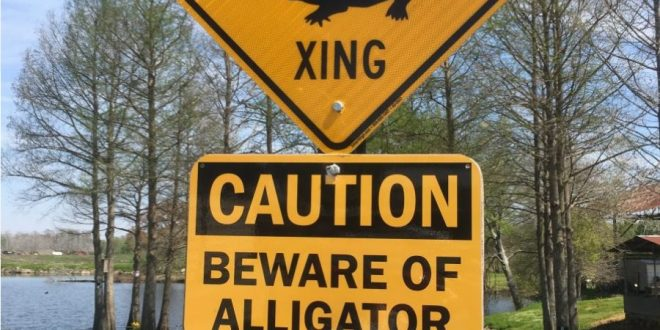 Where to see alligators in Louisiana?