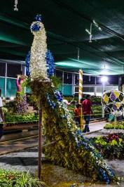 flower-show-brindavan-garden-mysore