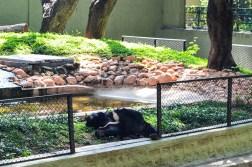 mysore-zoo (7)