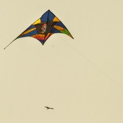 international-kite-festival-2019-1