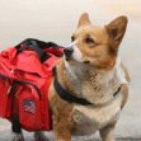 Services for You Dog Back Pack Travel Camping Hiking Backpack Saddle Bag Red