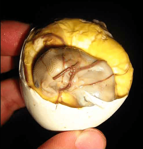 Experience Of Eating A Balut Backpackways Com