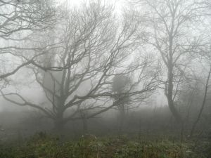 Woods in the fog and rain