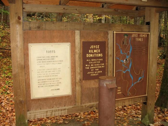 IMG 3788 1024x768 - Hike the Joyce Kilmer Memorial Forest