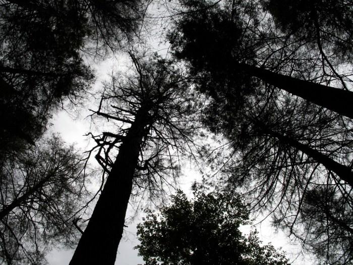 IMG 3798 1024x768 - Hike the Joyce Kilmer Memorial Forest