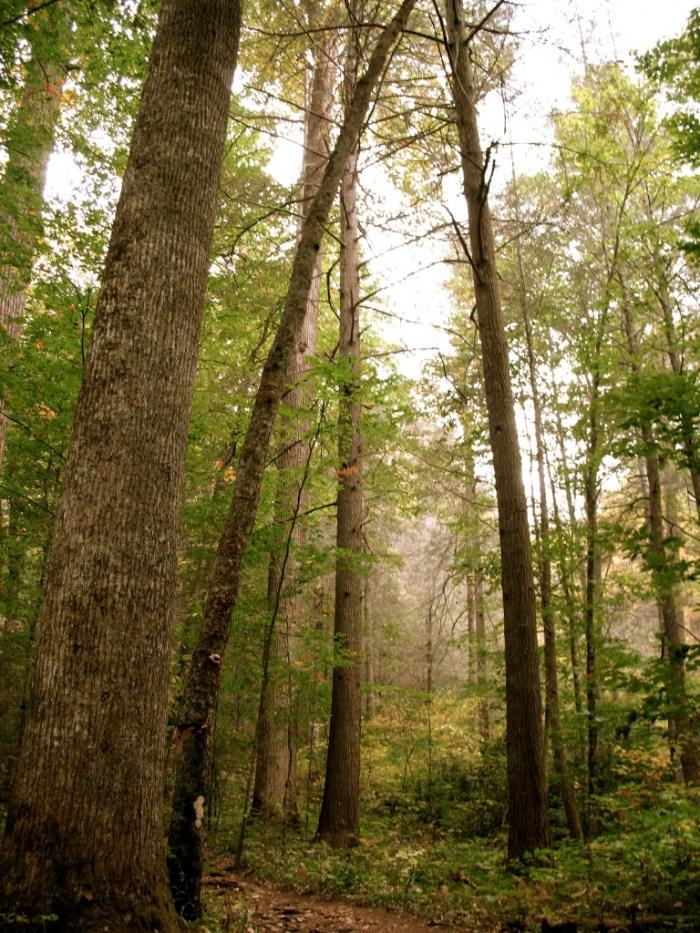 IMG 3828.JPG Version 2 768x1024 - Hike the Joyce Kilmer Memorial Forest