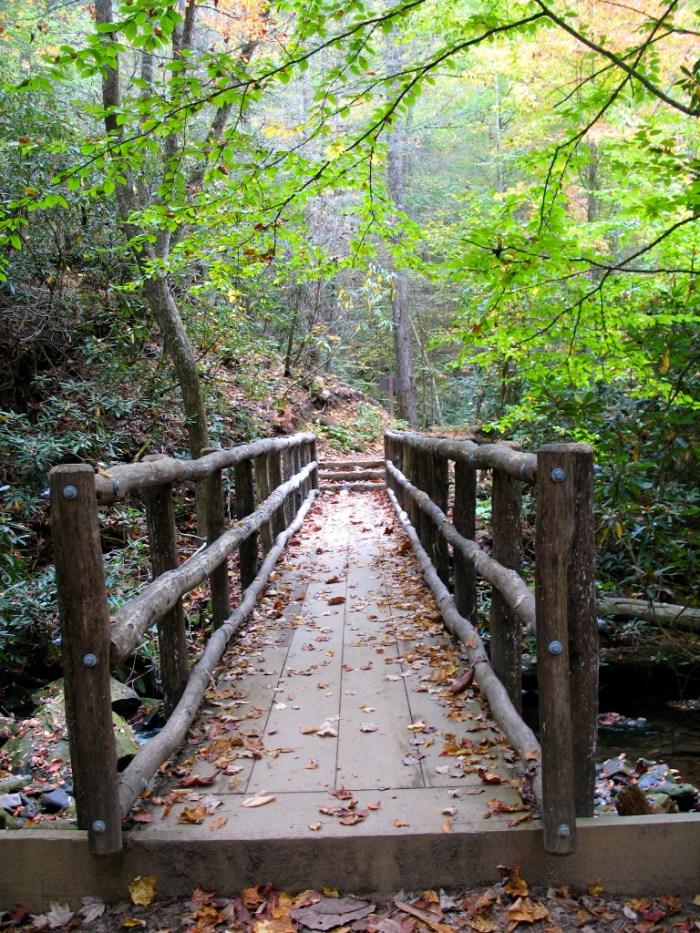 IMG 3891.JPG Version 2 768x1024 - Hike the Joyce Kilmer Memorial Forest
