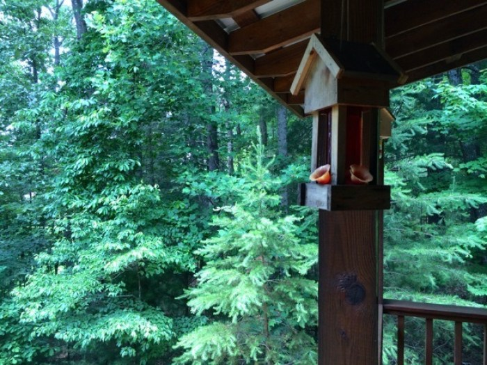 IMG 3862 - A Visit to Pinebox: My Mountain Cabin