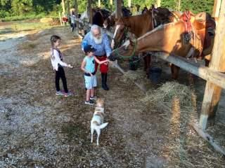 Santa and Kids Feeding Horses Indiana