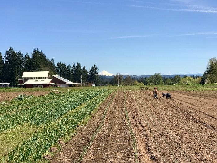 IMG 3826 - Oregon's Mt. Hood Territory: An Urban Adventure