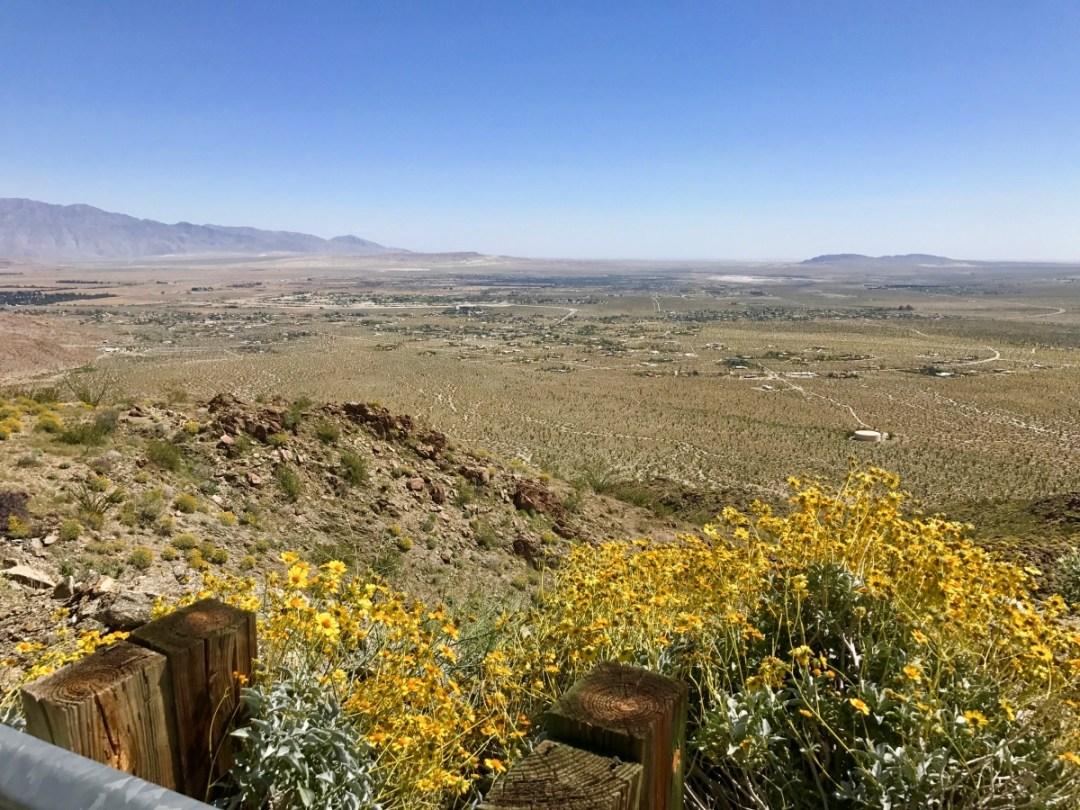 IMG 2204 - Wildflower Chasing at Anza-Borrego Desert State Park California