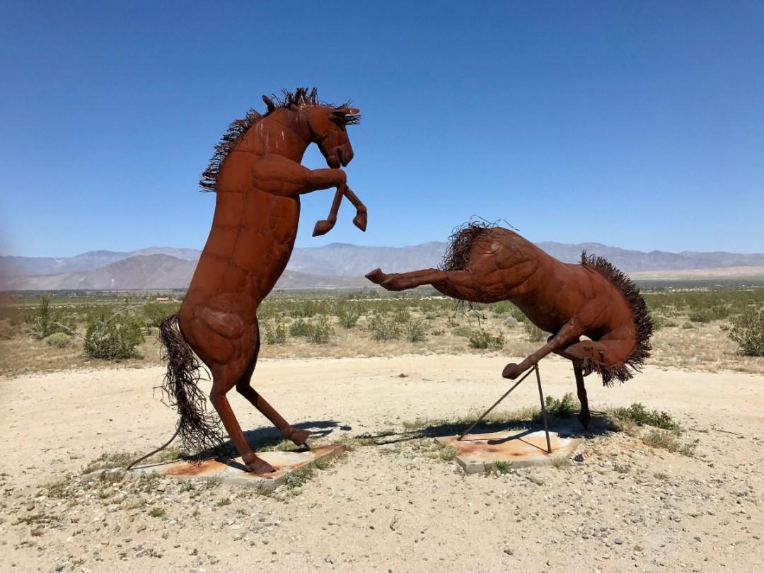 IMG 2236 - Wildflower Chasing at Anza-Borrego Desert State Park California