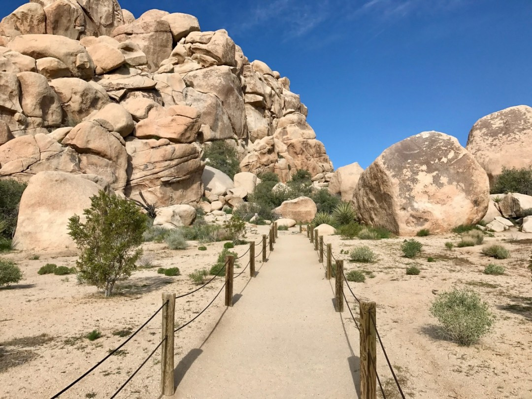 IMG 2388 - Best Hikes in Joshua Tree National Park on a One-Day Trip