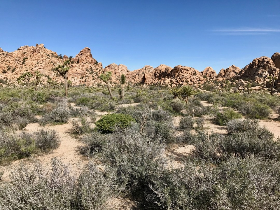 IMG 2391 - Best Hikes in Joshua Tree National Park on a One-Day Trip