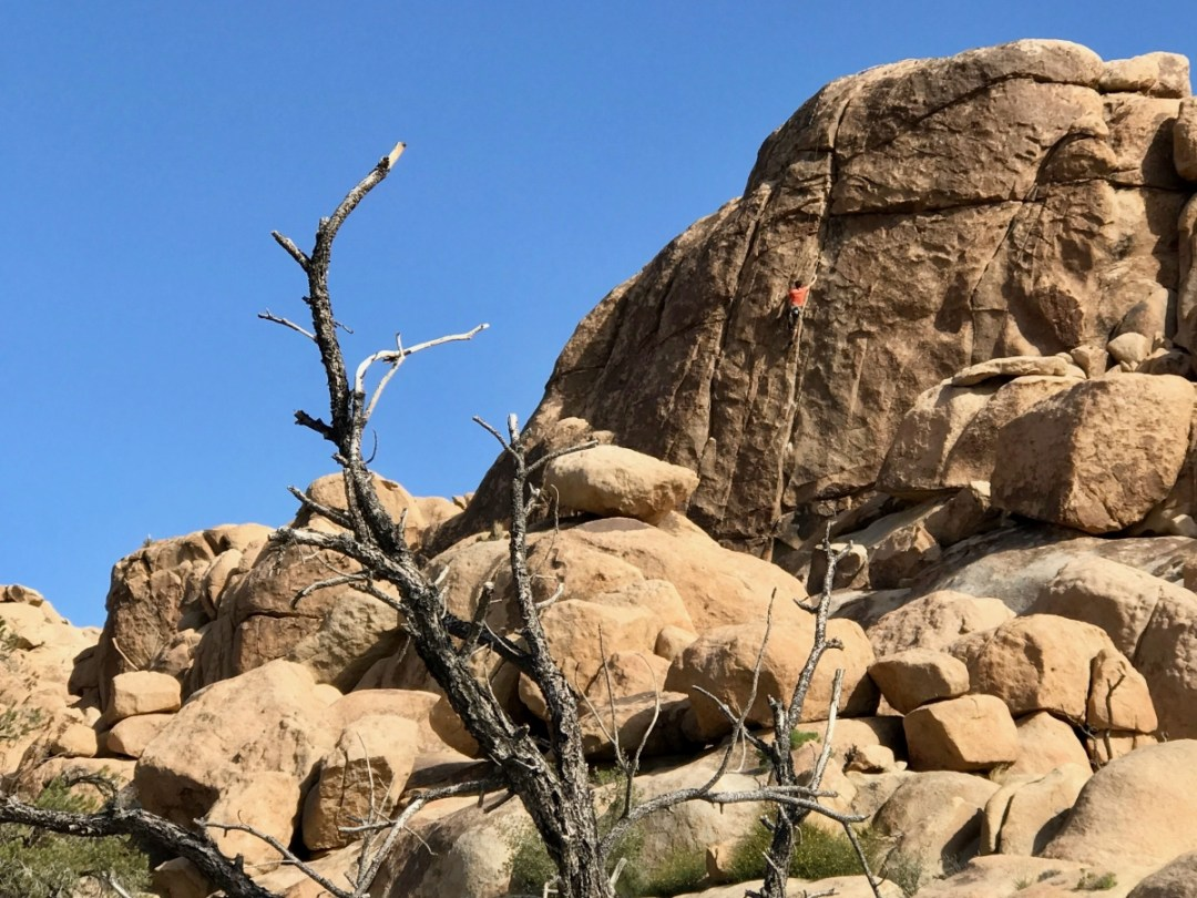 IMG 2414 - Best Hikes in Joshua Tree National Park on a One-Day Trip