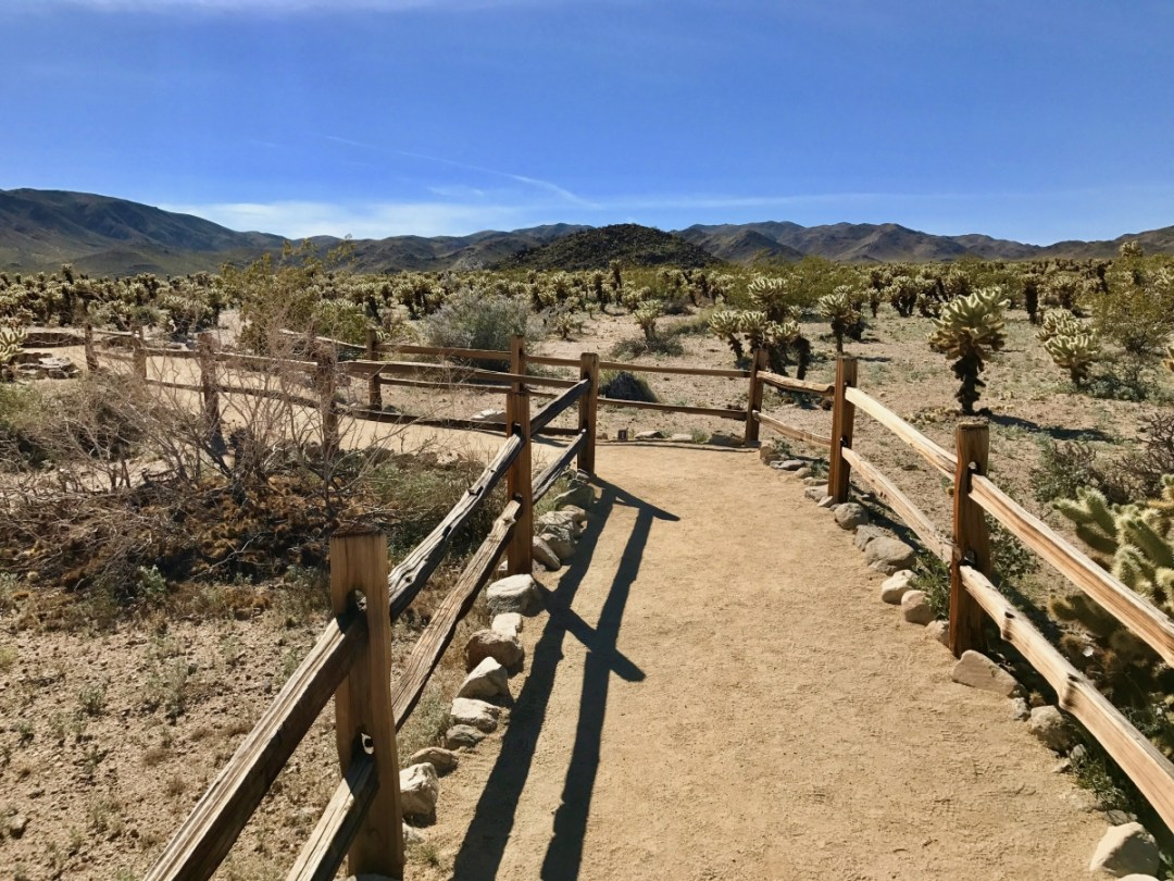 IMG 2578 - Best Hikes in Joshua Tree National Park on a One-Day Trip