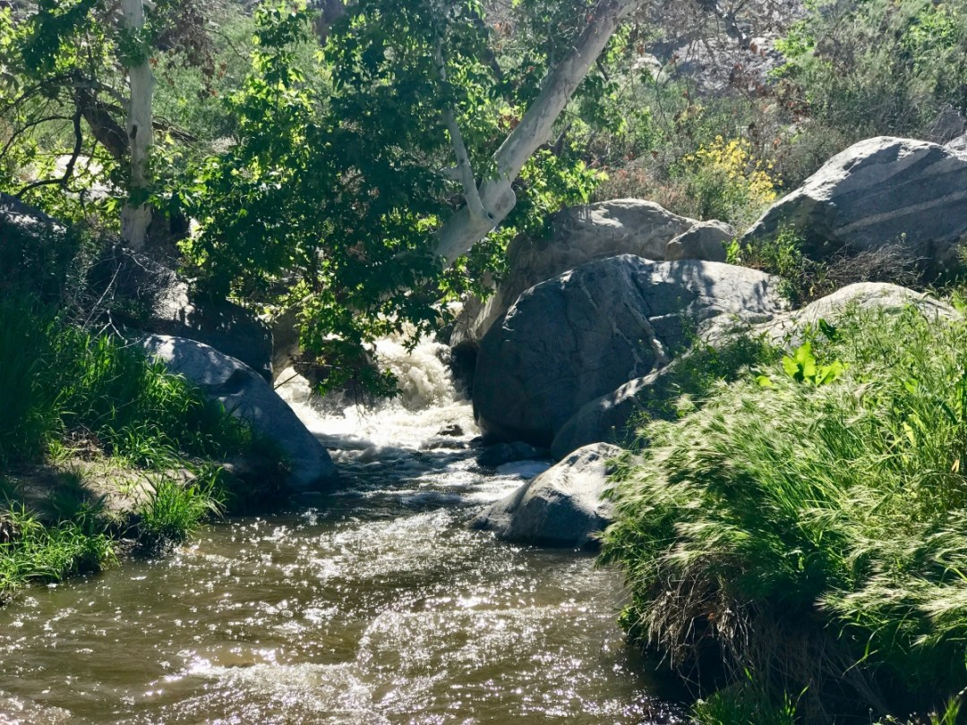 IMG 2692 - Take a Hike up Southern California's Tahquitz Canyon