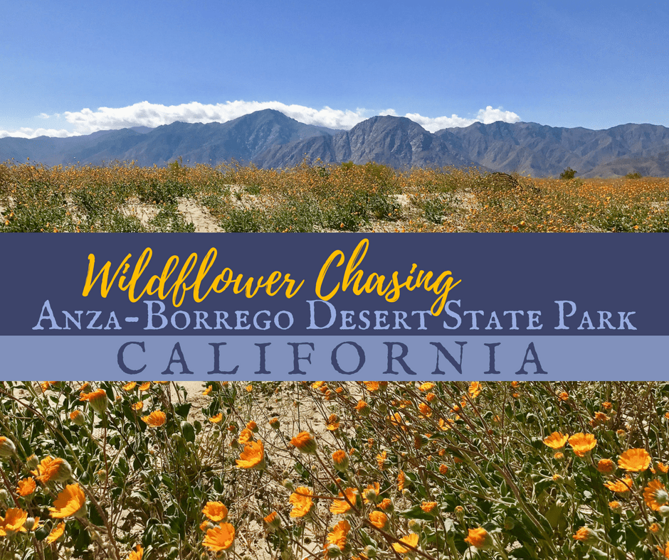 Wildflower Chasing - Take a Hike up Southern California's Tahquitz Canyon