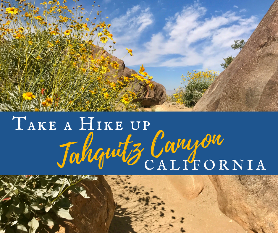 Take a Hike up 2 - Wildflower Chasing at Anza-Borrego Desert State Park California
