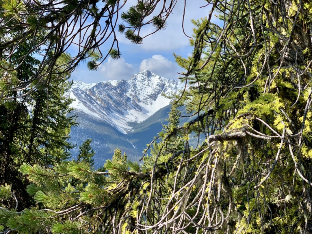Tree Framed Mountain - The Best Sites & Activities for a Town of Banff Adventure