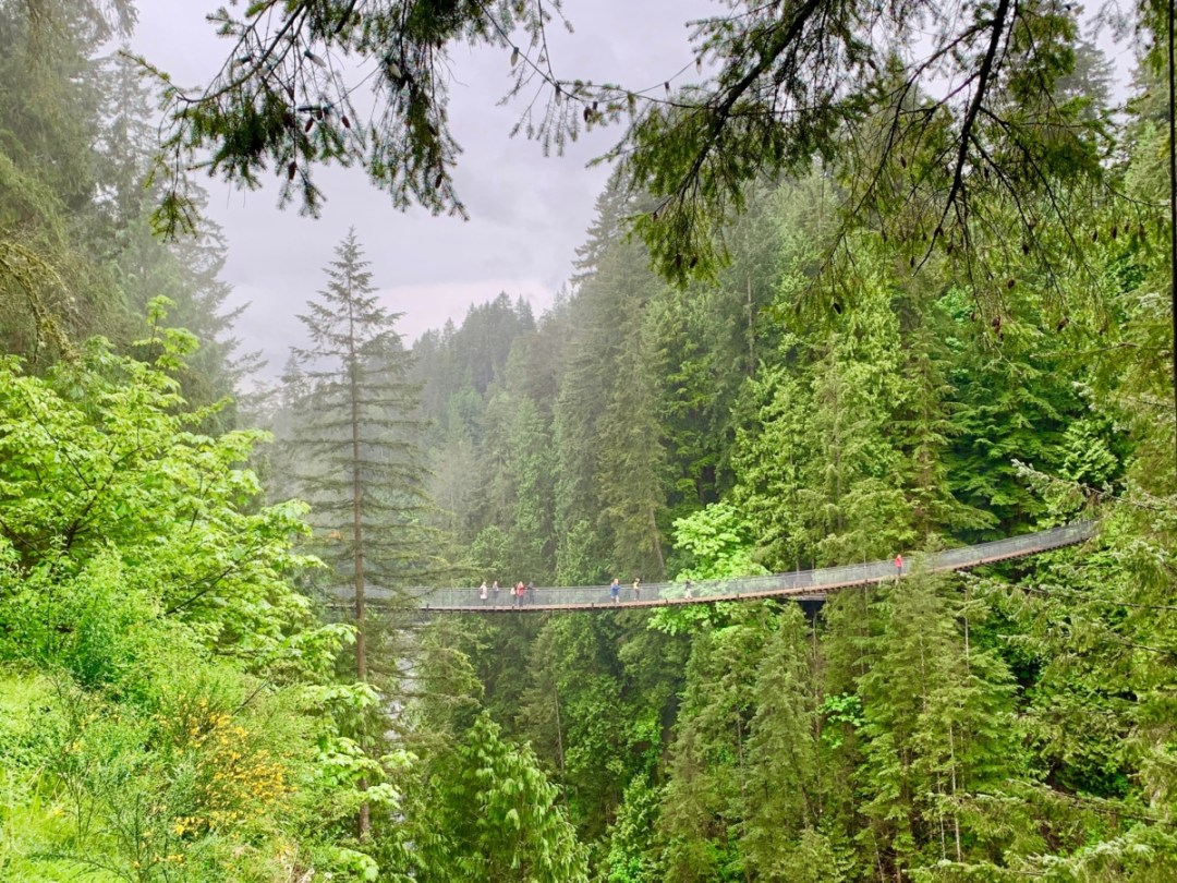 Capilano Suspension Bridge - Tour Capilano Suspension Bridge Park and See Vancouver in a Day