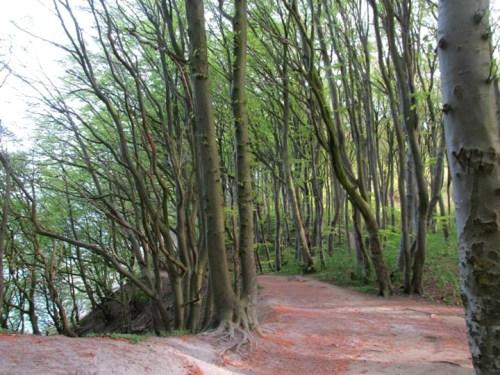 One of the hiking trails around the coast near Mons Klint