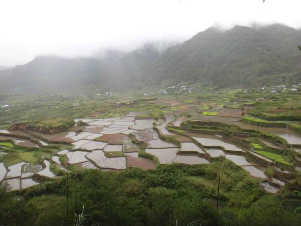 Rice terraces in Sagada, Philippines