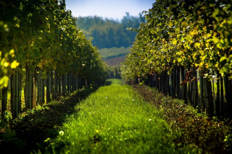 Yarra Valley vineyard a great day trip from melbourne
