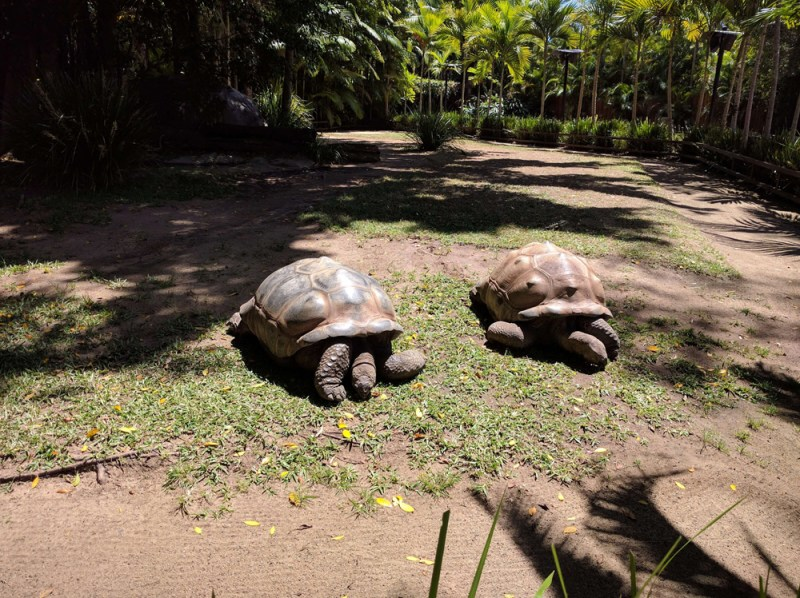 Giant Tortoises at Australia Zoo