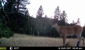 Trail Cam at the Apple Tree