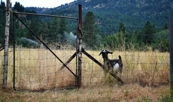 Frugal Farmer: Starting a Farm