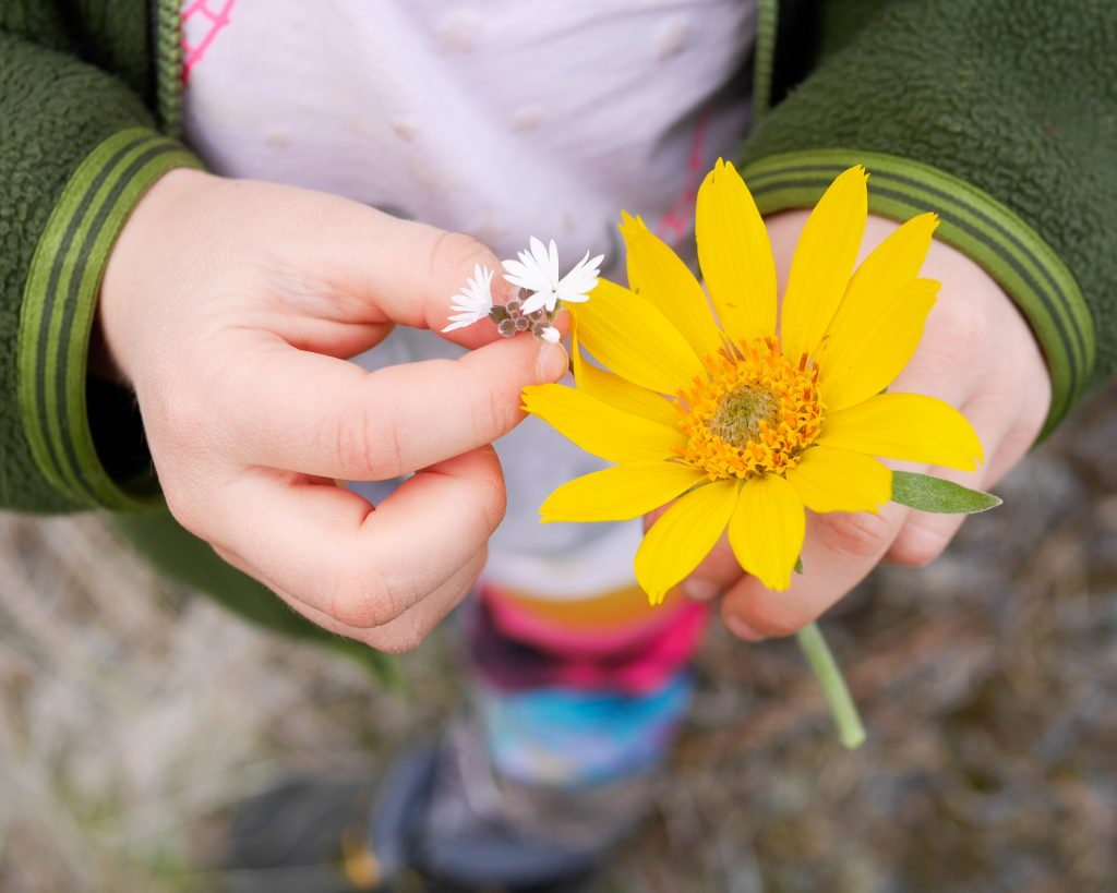 Signs Of Spring Nature Walk For Kids Free Printables